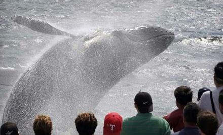 A Cape Ann Whale Watch - A Cape Ann Whale Watch in Gloucester