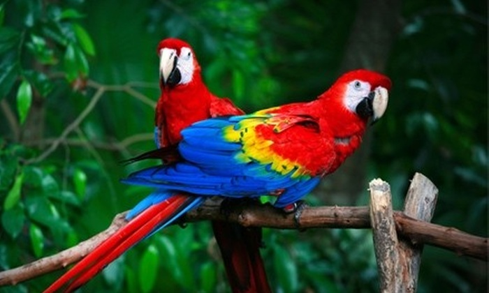 Moody Gardens - Galveston: Conservatory Outing for One, Two, or Four at Moody Gardens in Galveston (Up to 56% Off)