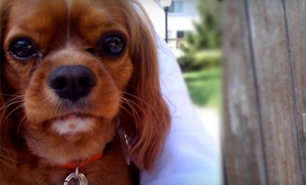 $65 Groupon to Whiskers and Leo Pet Care - Whiskers and Leo Pet Care in