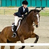 Up to 64% Off Horse-Riding Lessons in West Chester