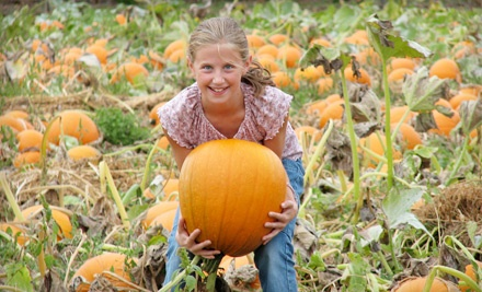 2 Weekday Children's Fun Passes and Two Half-Litre Apple Ciders (a $17 value) - Applebarn Pumpkin Farm in Abbotsford