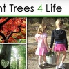 46% Off at Plant Trees 4 Life