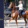 Up to 56% Off Horse-Riding Lesson