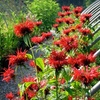 Half Off Flowers at Sunlight Gardens