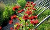 Sunlight Gardens - 3: 25 for $50 Worth of Flowers at Sunlight Gardens