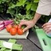 61% Off Home Vegetable Garden