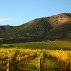 Boutique Hotel Minutes from Napa Valley Wineries