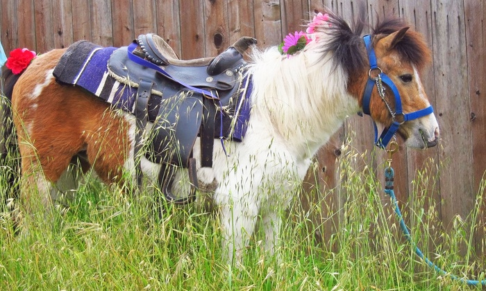 Friendly Pony Parties & Barnyard Pals - San Francisco: Mobile Pony and Petting Zoo for Parties from Friendly Pony Parties & Barnyard Pals (Up to 61% Off)