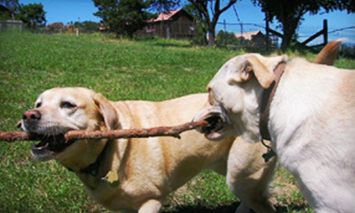 MoonDoggy Ranch - Petaluma: $95 for Up to Five Days of Cage-Free Pet Boarding at MoonDoggy Ranch in Cotati (Up to $190 Value)
