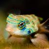 50% Off Aquarium Tour and Science Labs