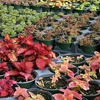 Up to 53% Off at Painters Greenhouse in Old Fort