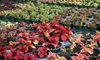 Painters Greenhouse - Sundance Ridge: Native Plants, or Bedding Annuals and Vegetables at Painters Greenhouse in Old Fort (Up to 53% Off)