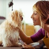 Up to 51% Off Dog Grooming at Pet Effects Grooming
