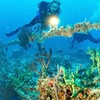 Silent World Dive Center – Up to 35% Off Scuba Trips