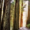Cabin Stay at The Redwoods RV Resort in Redwood National Forest