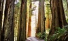 The Redwoods RV Resort - Crescent City: Two-Night Cabin Stay at The Redwoods RV Resort in Redwood National Forest