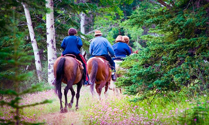 Hidden Hills Farm & Saddle Club - Ooltewah: One-Hour Evening Firefly Ride for Two or Two Riding Lessons at Hidden Hills Farm & Saddle Club in Ooltewah (Half Off)