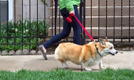 Three or Five Private Dog Walks from Hooves and Paws (Up to 60% Off)