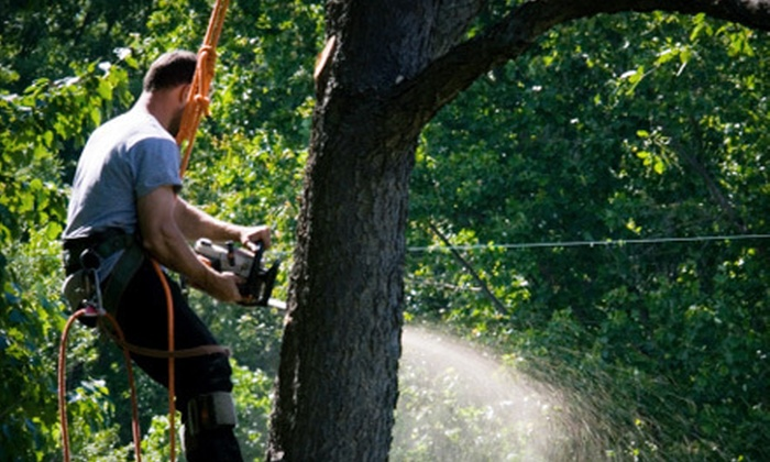 At Your Request Landscaping & Tree Service - Fort Worth: $75 for Tree Trimming or Removal from At Your Request Landscaping & Tree Service (Up to $225 Value)