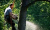 At Your Request Landscaping and Lawn - Fort Worth: $75 for Tree Trimming or Removal from At Your Request Landscaping & Tree Service (Up to $225 Value)