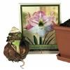 Apple Blossom Amaryllis Gift Kit