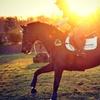Fino a 5 lezioni di equitazione