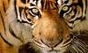 Austin Zoo - Rawhide Ridge: Zoo Visit for Two, Four, or Six to Austin Zoo (Up to 48% Off)