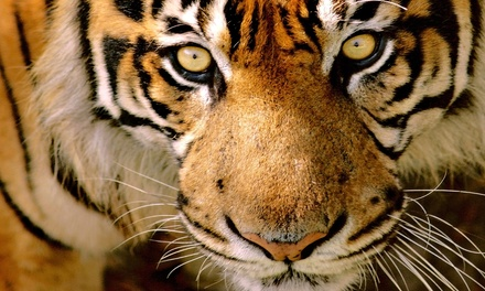 Zoo Visit for Two, Four, or Six to Austin Zoo (Up to 37% Off)