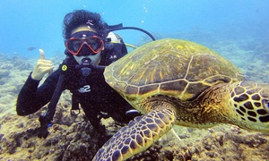 RainbowScuba.com:  Private Boat Scuba Diving Charter with RainbowScuba.com (Up to 42% Off). 10 Options.