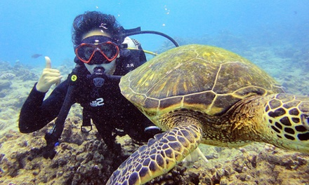 Private Boat Charter & Scuba or Shallow Scuba Diving from RainbowScuba.com (Up to 42% Off). 10 Options.