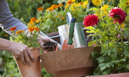$13 for $20 Worth of Plants and Gardening Supplies at Abner's Garden Center