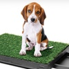 Up to 56% Off Indoor Dog-Relief Systems