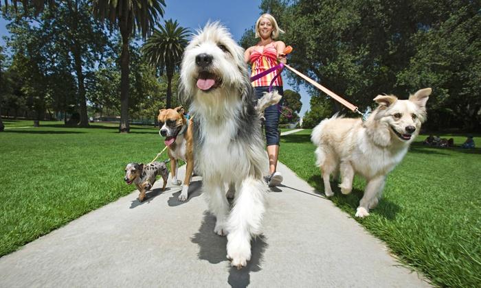 Dan's Dog Walking and Pet Sitting - Port Washington: 5, 10, 15, or 20 Half-Hour Relief Dog Walks at Dan's Dog Walking and Pet Sitting (Up to 73% Off)