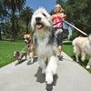 Up to 73% Off Relief Dog Walks