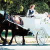 Half Off Private Horse-Drawn-Carriage Tour