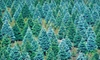 Up to 51% Off at Mountain Pines Christmas Tree Farm