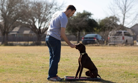 60-Minute In-Home Dog-Obedience Evaluation and Training from precision k9 work (39% Off)