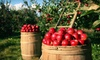 Ridgefield Farm - Ridgefield Farm: Apple Picking and a Cornfield-Maze Outing for Two or Four at Ridgefield Farm (Up to 53% Off)
