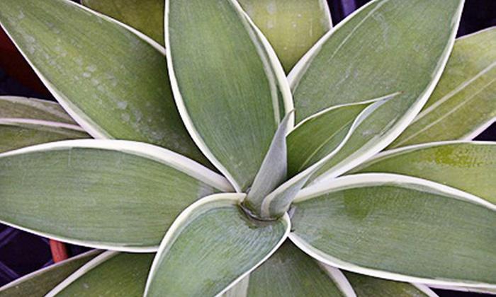 Leucadia Succulents - Encinitas: $15 for $30 Worth of Potted Plants at Leucadia Succulents