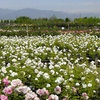 50% Off Plants, Shrubs, and Trees