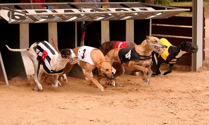 Doncaster Greyhound Stadium (GBGB) - Meadowcourt Stadium: Greyhound Races with Programme, Meal and Drink for Up to Six at Doncaster Greyhound Stadium (Up to 74% Off)