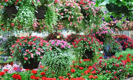 $10 for $20 Worth of Flowers, Plants, Gardening Supplies, and Hanging Baskets at Johansen Farms