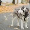 38% Off Dog Walks