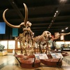 Up to 48% Off University of Michigan Museum of Natural History