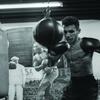 48% Off Boxing / Kickboxing - Training