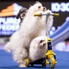 Olate Dogs – Up to 48% Off Canine Variety Show