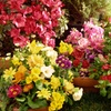Up to 52% Off Flowers and Plants