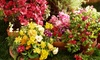Lakeshore Garden Centre - Lakeshore Garden Centre: Flowers, Shrubs, and Trees at Lakeshore Garden Centre (Up to 52% Off). Two Options Available.