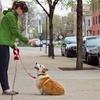 Up to 52% Off Dog Walking or Pet Sitting