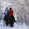 50% Off Winter Trail Ride from Carousel Horse Farm